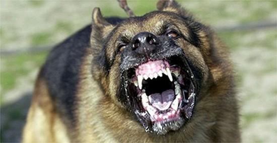 агресивно бездомно куче
